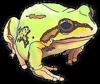 z Frog 2 Alpina 01c.png