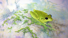 """Embracing the randomness of the watercolour 'wet-in-wet' wash - """"Stony-creek frog"""""""