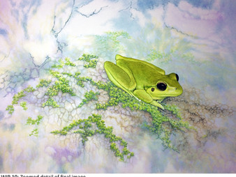"Embracing the randomness of the watercolour 'wet-in-wet' wash - ""Stony-creek frog"""