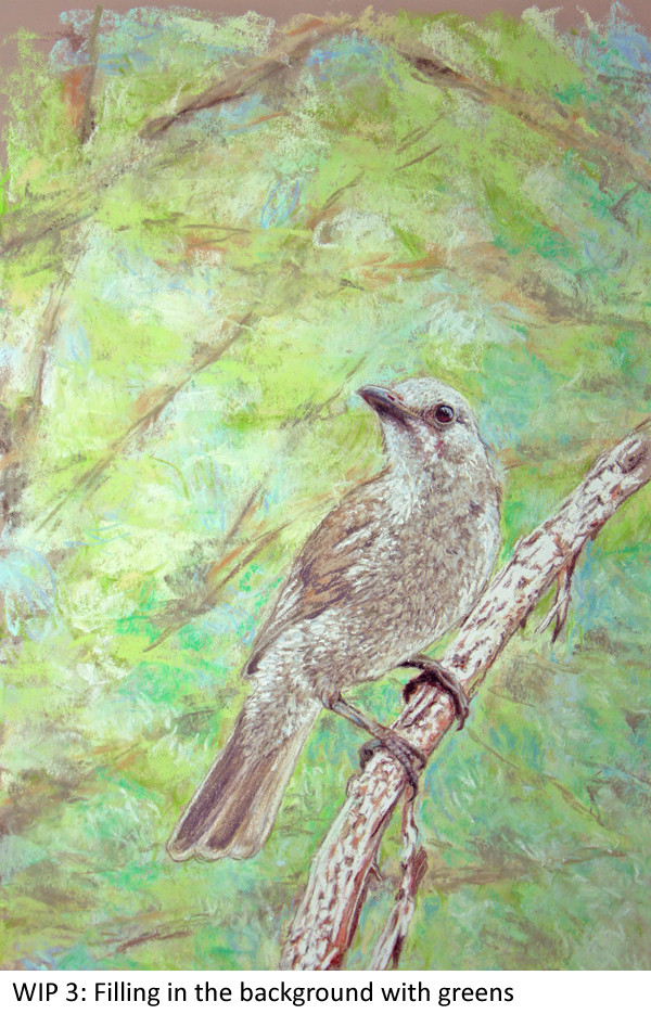 WIP 3 Shrike-thrush Laura Grogan 600 green.jpg