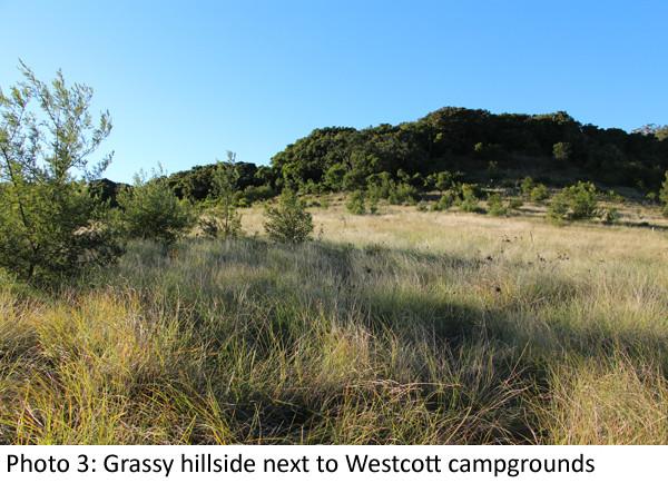 Grassy slope Westcott Laura Grogan 600 2.jpg