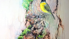 """Experimenting with style and texture in watercolours - """"Eastern Yellow Robin"""" WIP 1-7"""