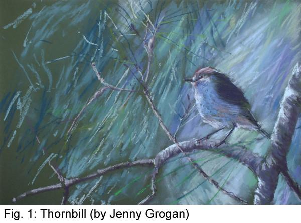 Thornbill.jpg