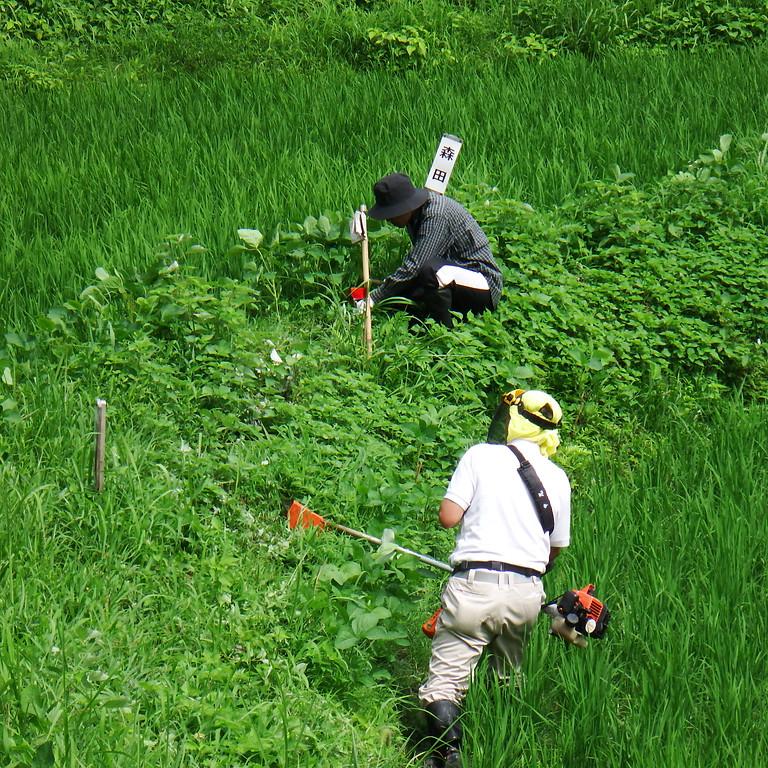 草刈り体験