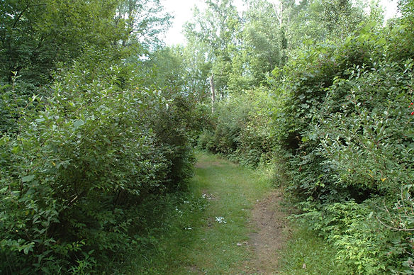 bad forest 3.JPG