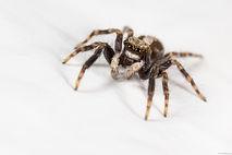 Exterminateur Araignée Trois-Rivières