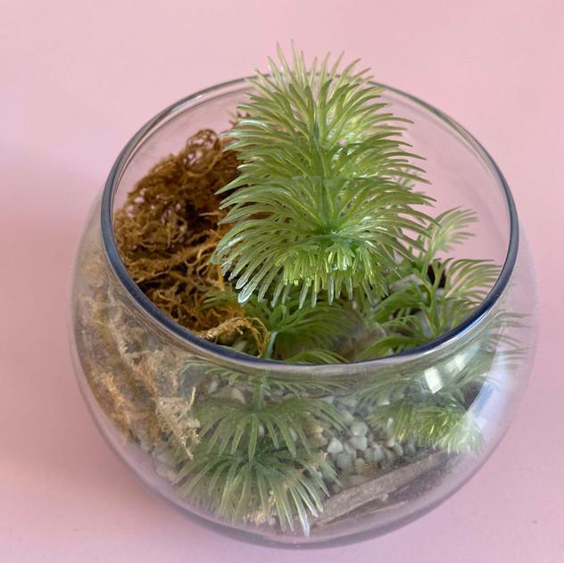 玻璃里的植物