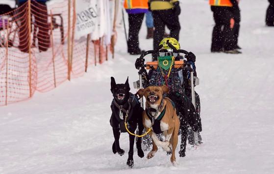 4-Dog Sprint - Idaho, USA