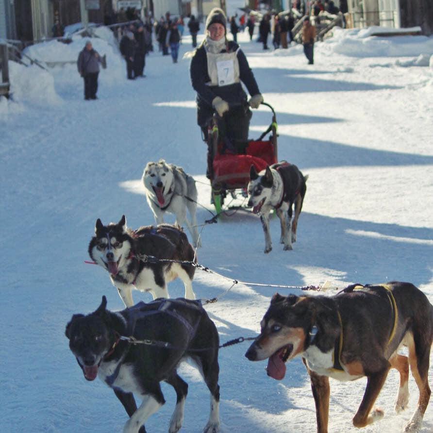 6-Dog Sled