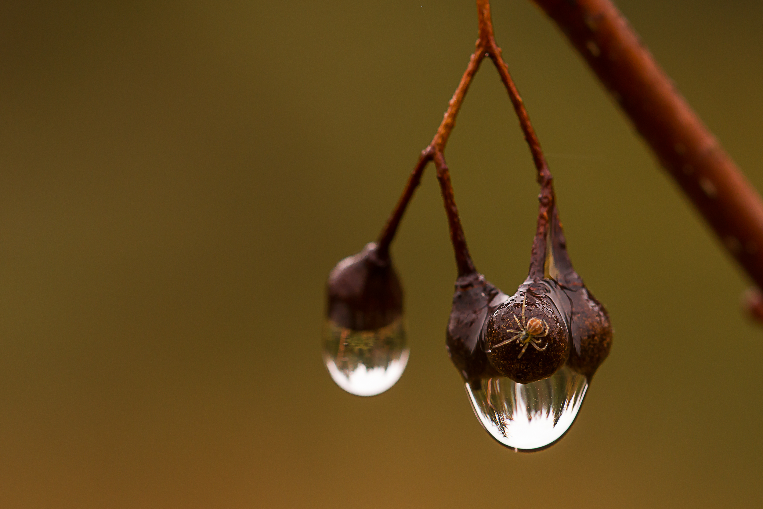 waterdrop and spider