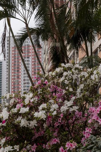 Choi Hung Estate, HK
