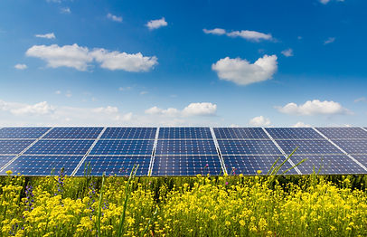 Photovoltaic modules and yellow flowers