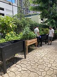 G raised garden beds.jpg