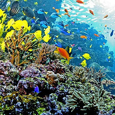 indo-pacific-barrier-reef-webcam.jpg