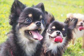 犬種に応じて定期的なトリミングを
