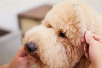 犬のブラッシングは病気の早期発見にも役立つ