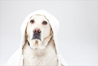 オゾンシャワーは犬に優しい洗い上がり