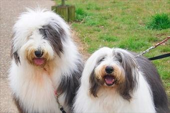 大田区でトリミングのご利用なら大型犬でも利用しやすい【らぶはーと】