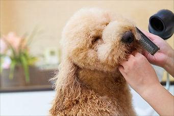 ペットホテル(羽田空港に近い)の利用・犬のトリミングなら【らぶはーと】