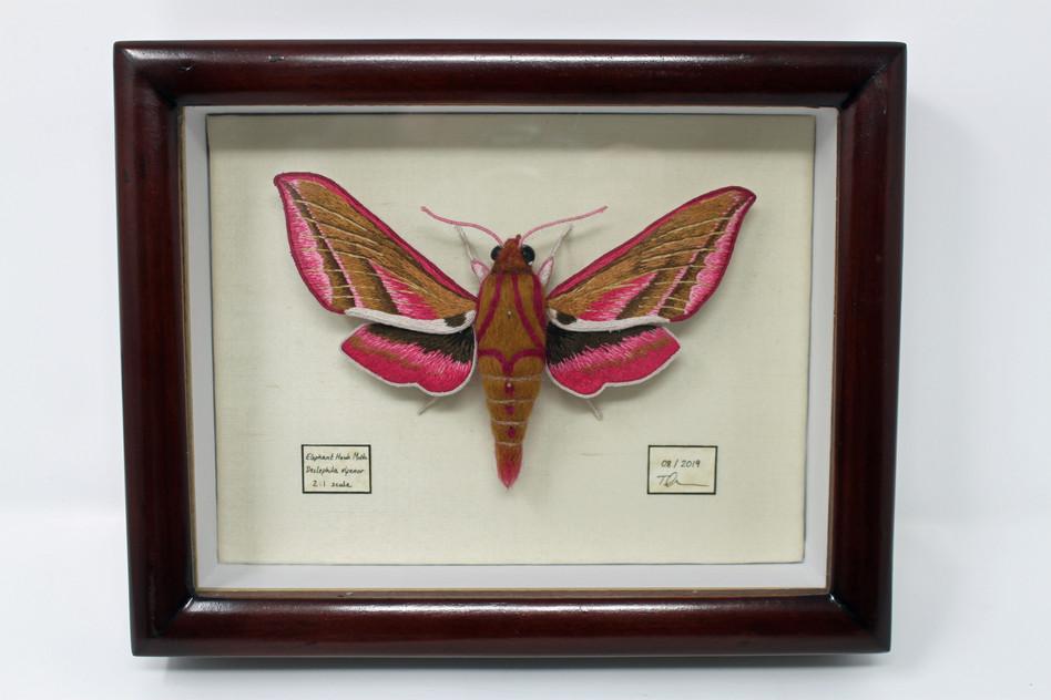 Moth mounted under glass.jpg