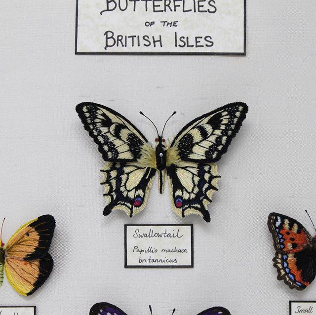 Butterfly Specimen Case (close up)