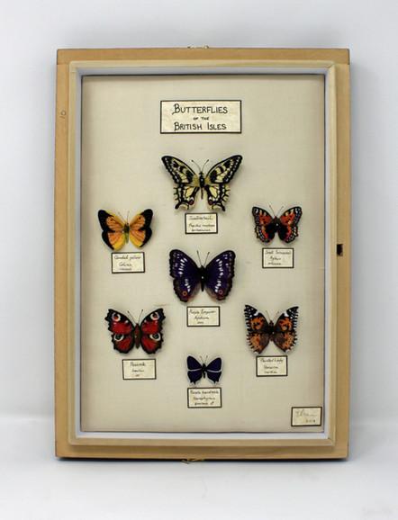 Butterfly Specimen Case (without glass)