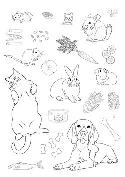 Pets colouring page