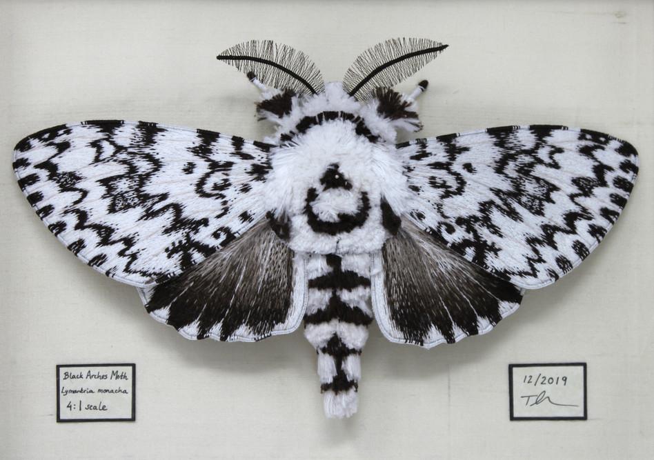 Tzipporah Johnston, Black Arches Moth, E