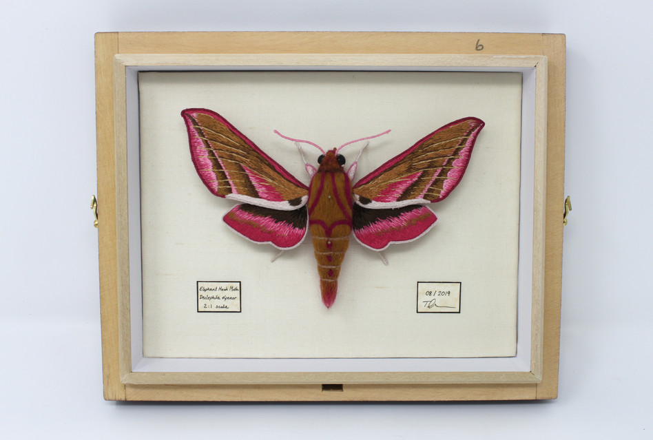 Moth mounted without glass.jpg