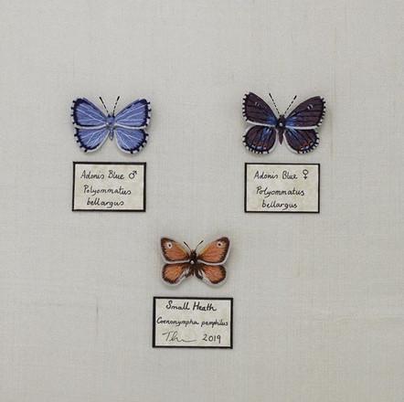 Set of Small Native Butterflies