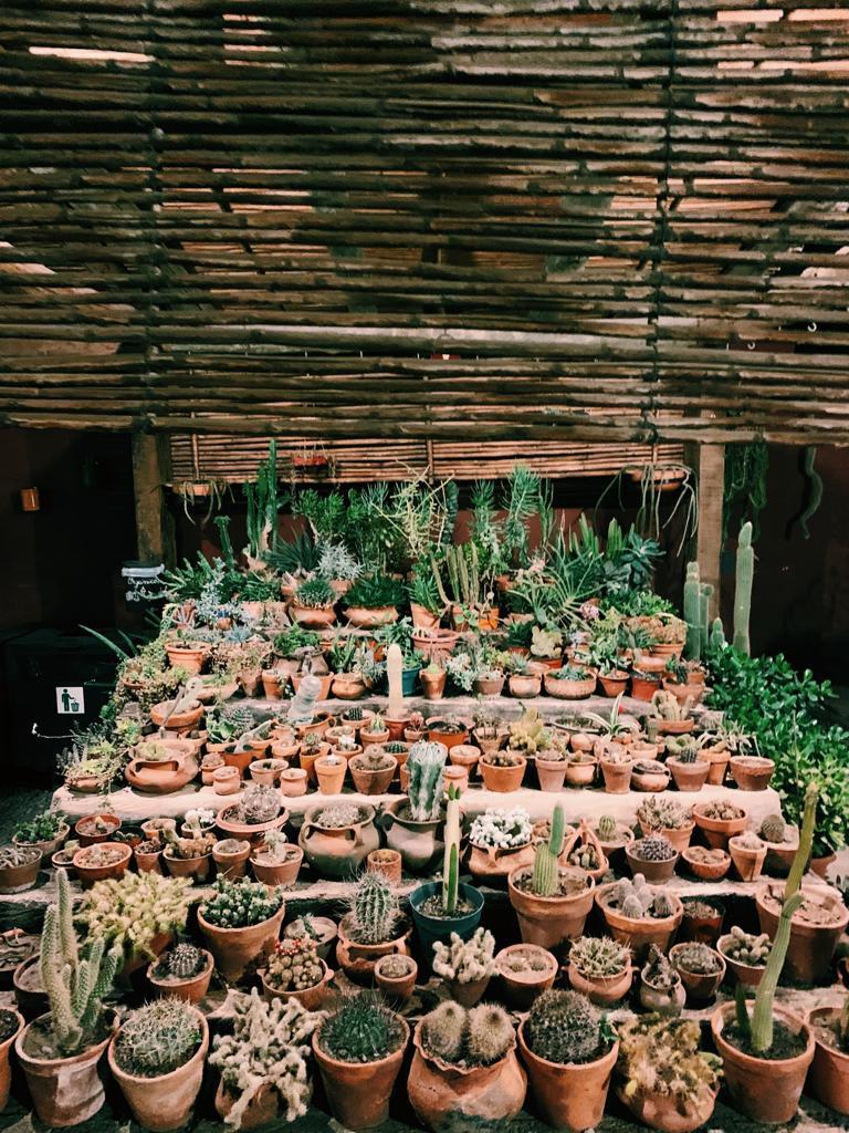 Coleção de cactos em Purmamarca, Jujuy - Argentina