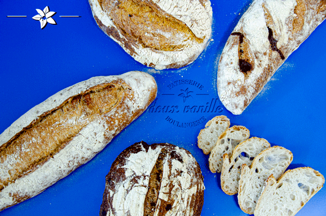 fermentação-02.png