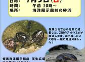 アオウミガメ放流のお知らせ