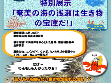 【特別企画】奄美の海の浅瀬は生き物の宝庫だ!