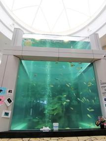 奄美海洋展示館再開と新型コロナウイルス感染症対策のお願い