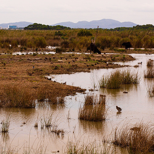 View of the wetlands in Majorca