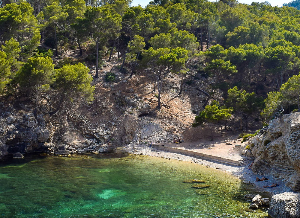 beach in Mallorca with turquoise water and pine trees. Ideal for nudists