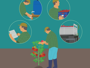 Guía para prevenir y reducir la pérdida de frutas y hortalizas