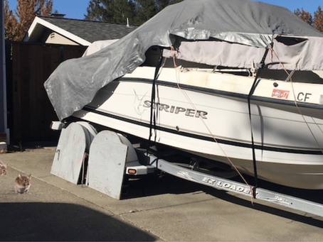 8 Ways to Keep Mice Out of Your Boat