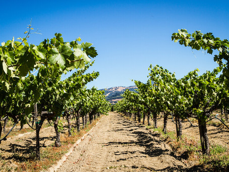 Is The El Dorado Hills Weather Ruining Your Wine?