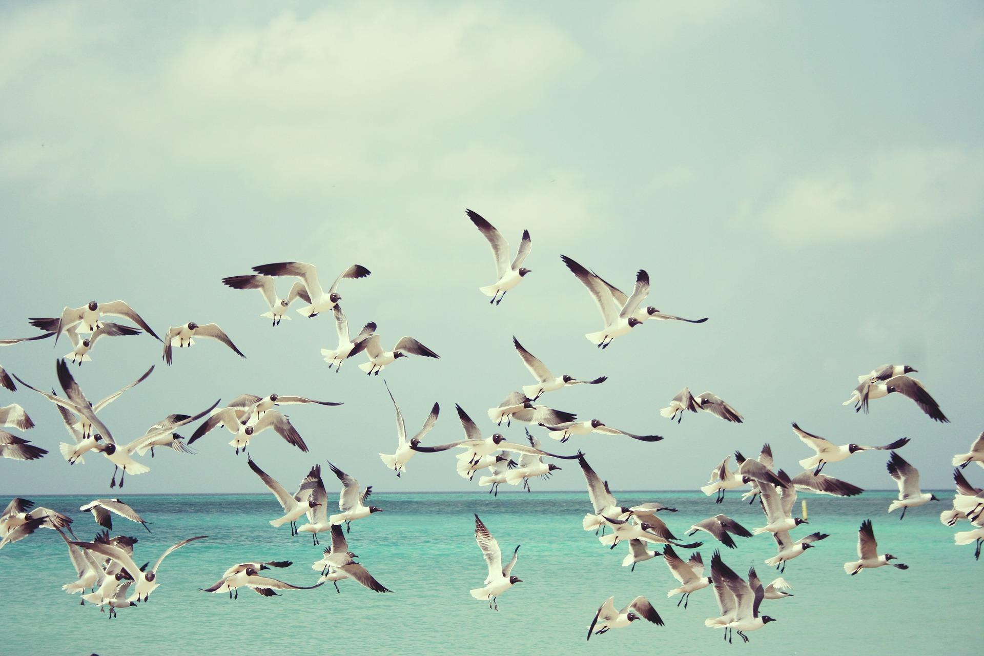 seagulls-815304_1920