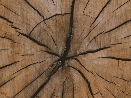 Why More People Choose Oak for Wood Flooring