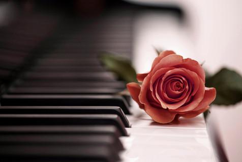 piano rose.jpg