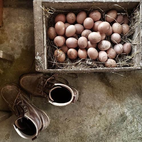 Docena huevos (Solamente en la décima región)