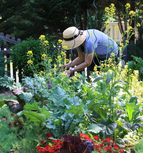 Mardi + veggie garden copy_edited.jpg