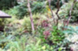 IMG_1354_edited.jpg