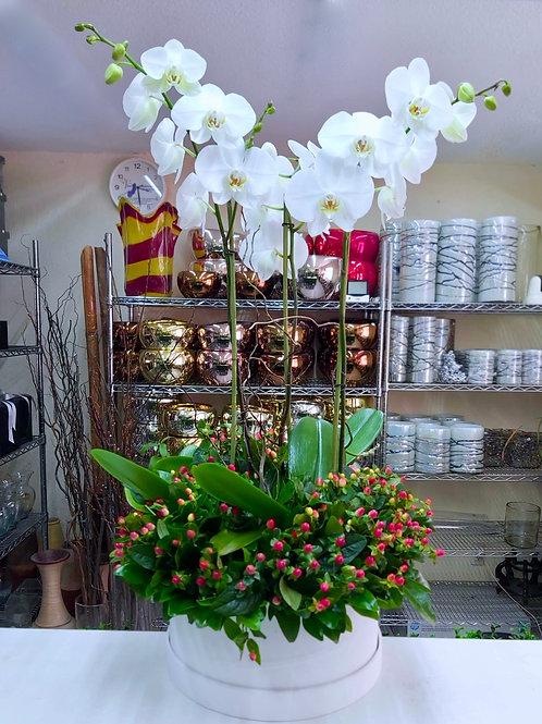 Phalaenopsis e hypericum