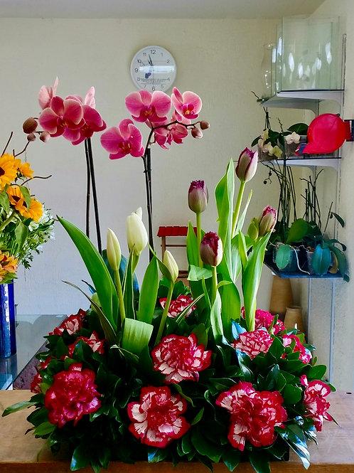 Phalaenopsis y tulipanes.