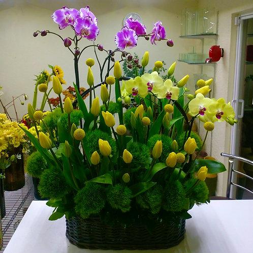 Canasta con Phalaenopsis y tulipanes