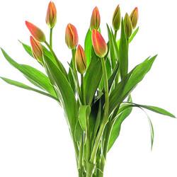 Tulipán naranja.